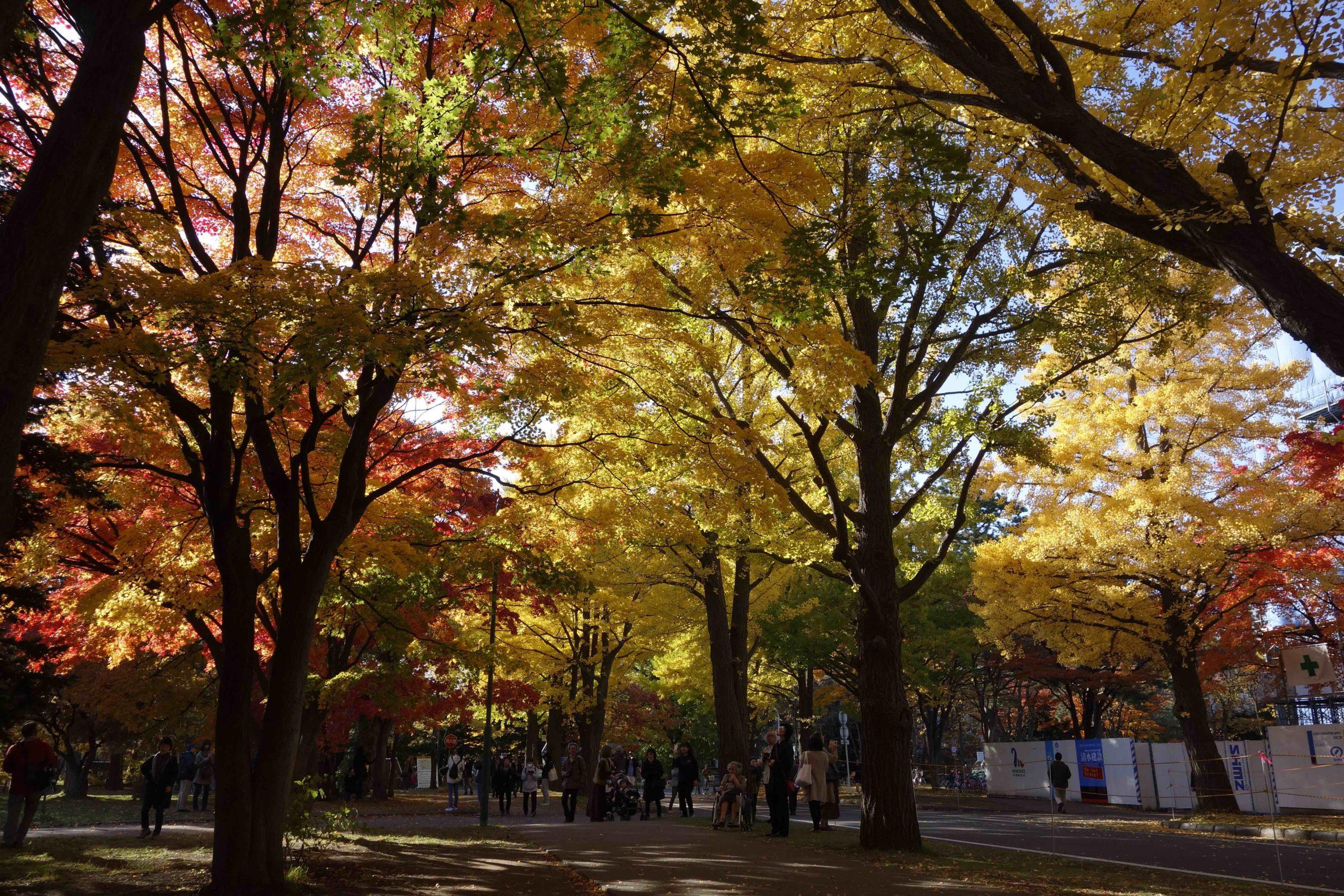 Walking Across Hokkaido University