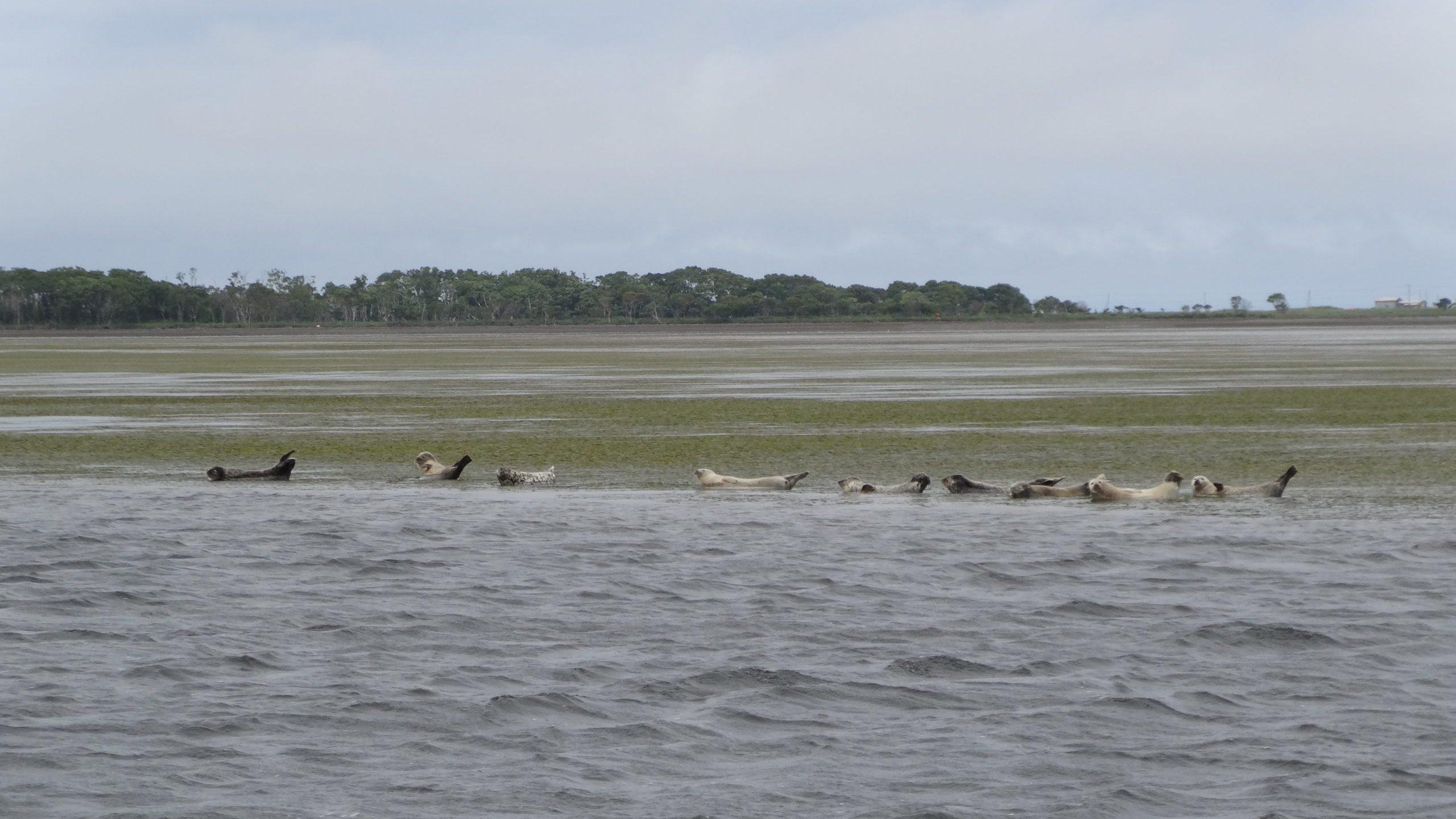 Notsuke Peninsula and Wildlife Cruises