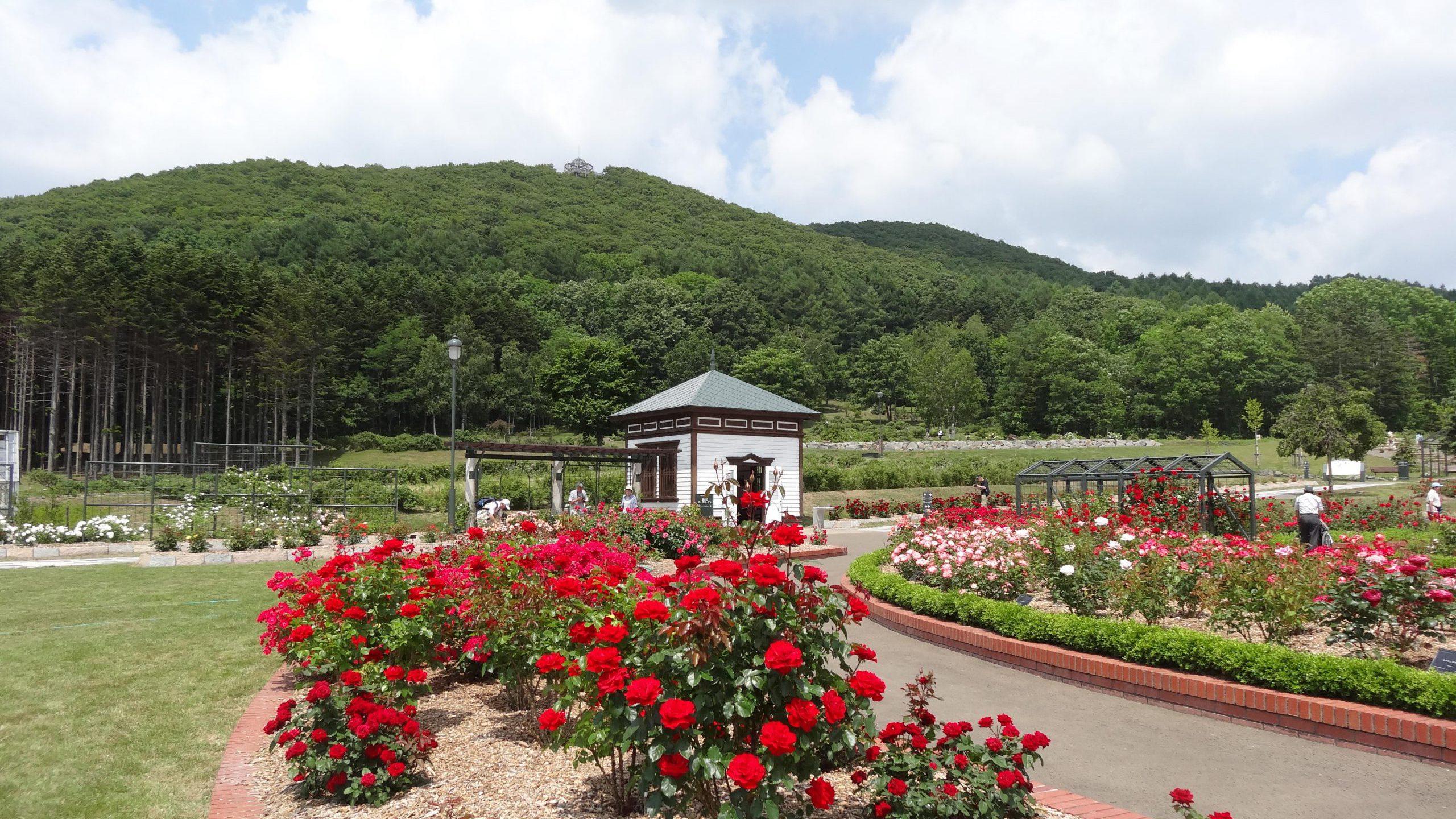 Virtual Tour: Iwamizawa Rose & Kuriyama Sake