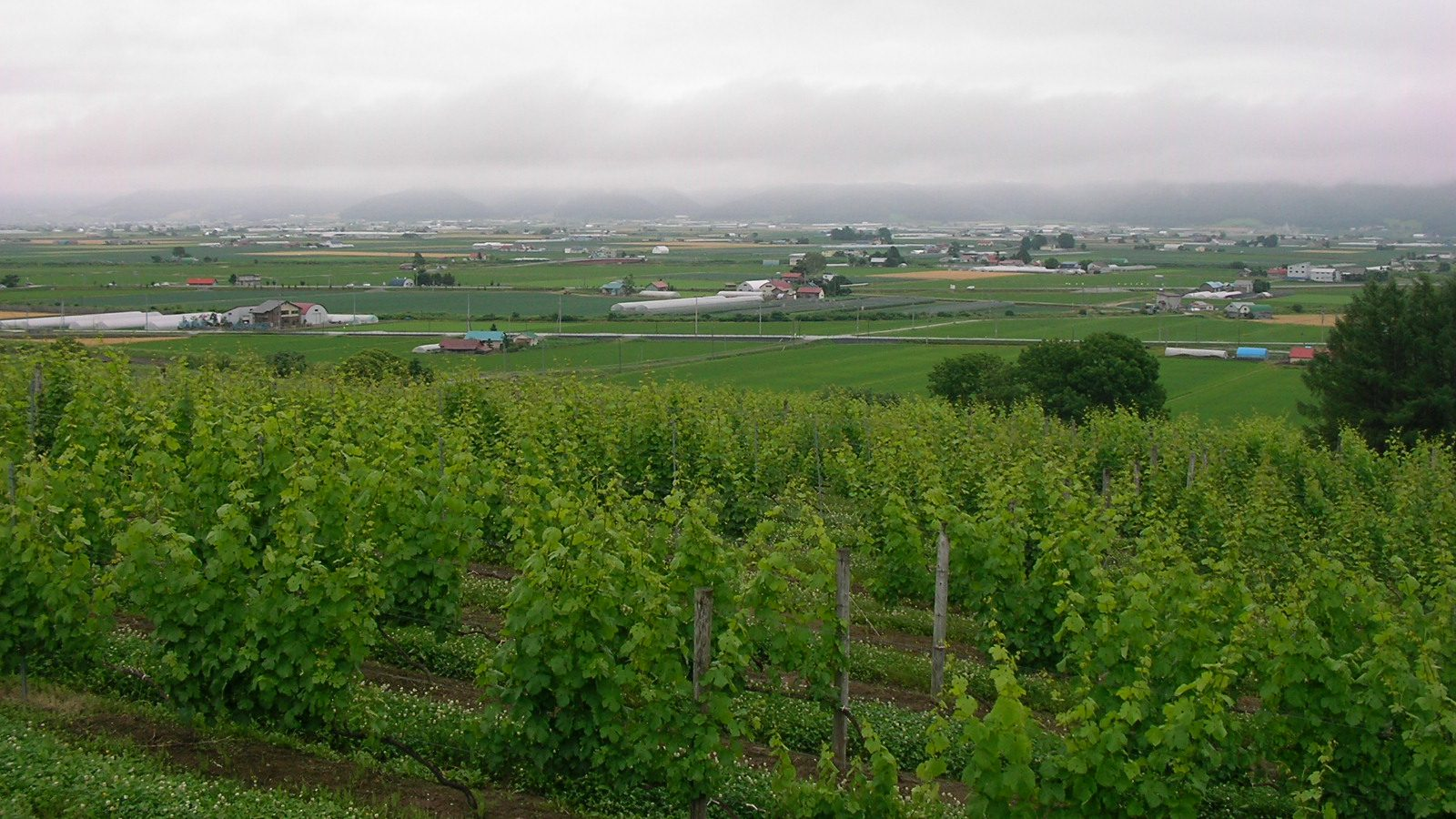 Explore Agricultural City Furano