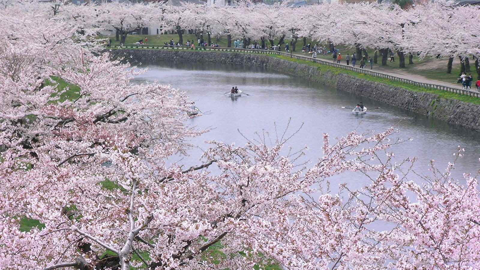 Cherry-blossom Viewing in Hakodate