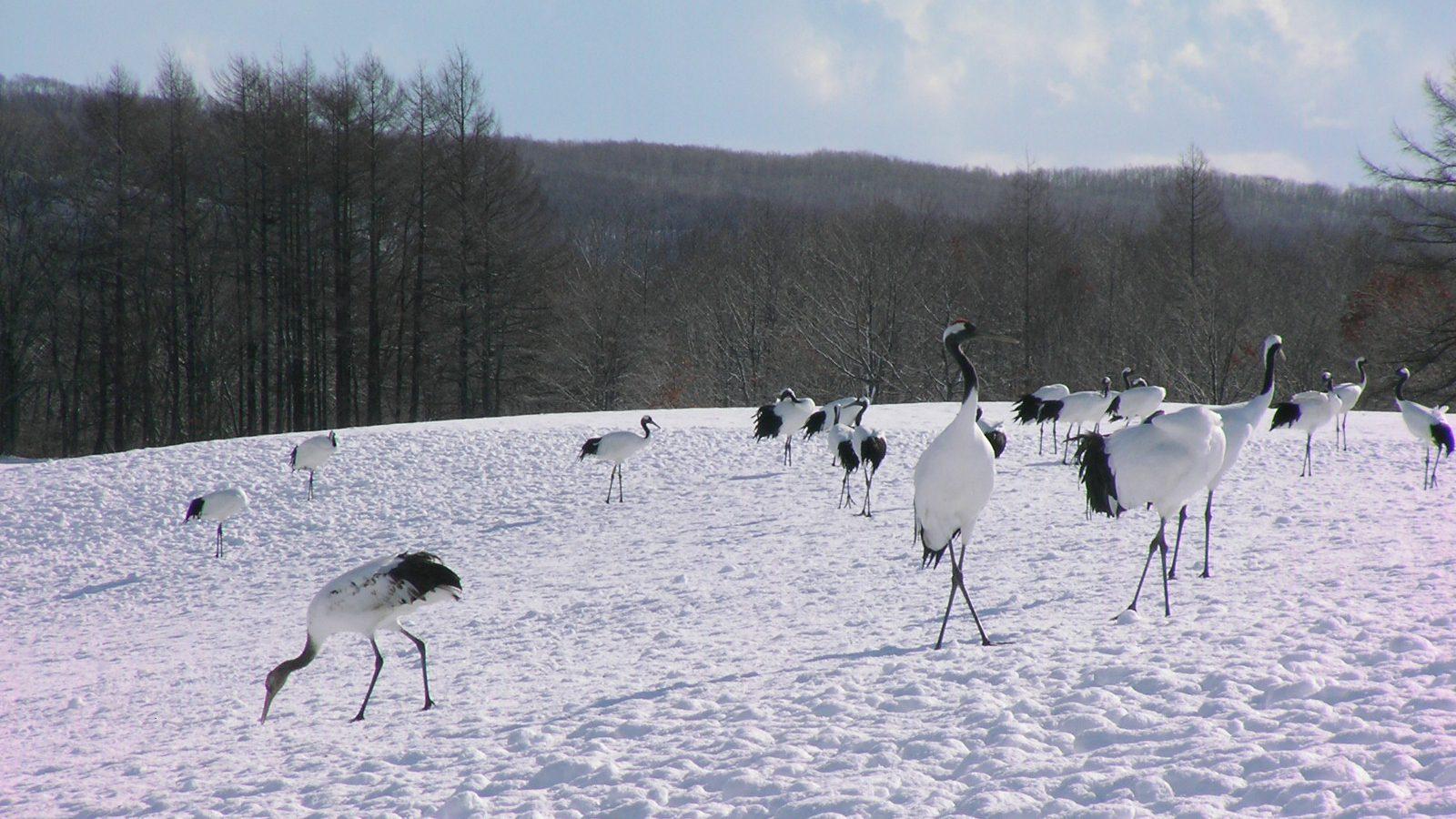 Wildlife Watching in Hokkaido